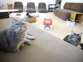 ねこの部屋 あまえんぼう 猫カフェクチコミ・ねこの部屋 あまえんぼう 猫カフェクーポン