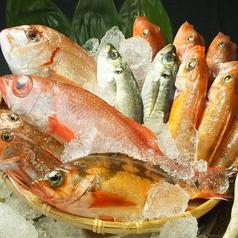 うんめ魚が食いてぇ 川崎漁港